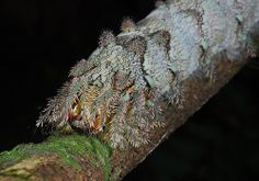 Monster caterpillar close-up