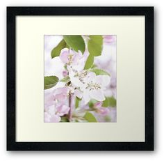 Apple Tree Blossoms Framed Art Print by ARTbyJWP from Redbubble #framedart #artprints #buyart #walldeco #blossoms --     Close-up of beautiful apple tree blossoms. • Also buy this artwork on wall prints, apparel, stickers, and more.