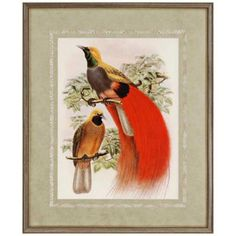 """Scarlet Birds of Paradise 34"""" High Framed Wall Art - $260, LAMPS PLUS"""