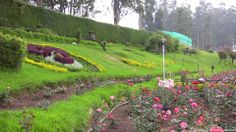 Landscape shot of Rose Garden, Ooty.