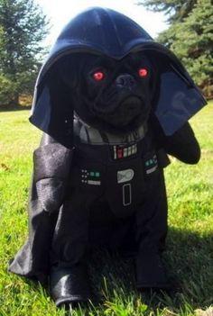 Bark Vader. #StarWars #Artsandcrafts