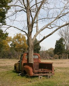 An abandoned old truck now has a tree growing through it as if to say life goes on. A pecan tree. Reminds me of my father's truck and of course with a pecan tree growing in it is as symbolic as it gets! Abandoned Cars, Abandoned Buildings, Abandoned Places, Abandoned Vehicles, Vintage Trucks, Old Trucks, Chevy Trucks Older, Lifted Trucks, Pickup Trucks