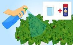 Get Rid of Stink Bugs Naturally - wikiHow