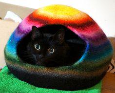 Crazy cascade colors cat cocoon