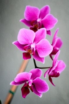 Orchids are Favorite