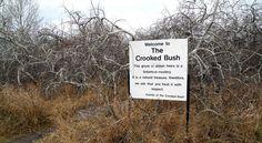 Crooked Bush, Saskatchewan