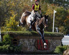 Irish Sport Horse rolex