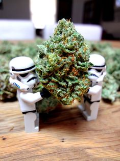 Welcome to the Dank side