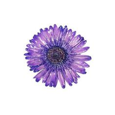 NOVICA Handmade Natural Flower Brooch Pin ($25) ❤ liked on Polyvore featuring jewelry, brooches, clothing & accessories, natural flower, novica, novica jewelry, flower jewellery, flower broach and pin jewelry
