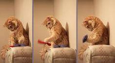 kedi ile ilgili görsel sonucu