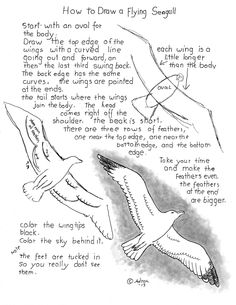 How To Draw A Flying Seagull