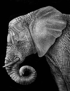 Elephant ink illustration. S) My favorite animal I want this as a huge print for my wall