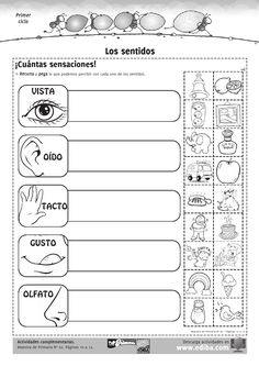 sentidos Black Haircut Styles new style black haircuts Senses Preschool, Preschool Spanish, Elementary Spanish, Spanish Classroom, Teaching Spanish, Elementary Schools, Teaching Resources, Five Senses Worksheet, Spanish Lessons