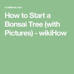 How to Trim a Bonsai. Bonsai is the Japanese practice of growing miniature trees in small containers. The art of bonsai lies primarily in the grower's ability to shape the tree in order to contain and direct its growth. Making Stained Glass, Stained Glass Projects, Making Essential Oils, How To Make Brown, Glass Supplies, Building A Shed, Service Dogs, Dog Training Tips, Wooden Boxes
