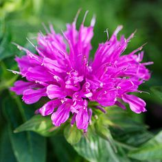Include florals.Plant something fragrant like purple magic basil where you'll brush against it.