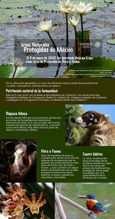 Mexico INFOGRAFIA: Balaan Kaax