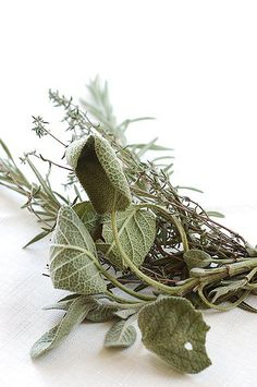 Rosemary, sage & thyme Spices And Herbs, Fresh Herbs, Fresco, Moss Grass, Bright White Background, Herbal Essences, Garden Markers, Rabbit Food, Healing Herbs