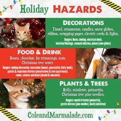 Keep your fur babies safe this holiday season! http://coleandmarmalade.com