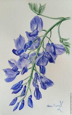 """Купить Акварель """"Глициния. Мазурка"""" - комбинированный, глициния, акварель, вальс цветов, цветы, цветы акварелью"""