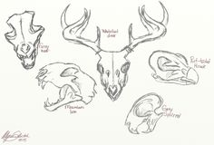 """""""Western Pennsylvania animal Skull chart"""" by Alysa Sketch. NOTE: yes, I actually do believe grey wolves are making their way into the smallest parts of Pennsylvania (along with it's enemy: the Mountain Lion or puma). I drew this because seeing a skull on my walks through the woods always peaks my interest."""