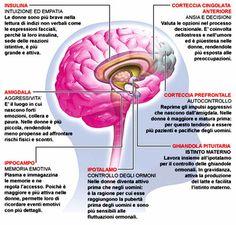 Didattica e Cervello: Roger Sperry, funzioni degli emisferi cerebrali