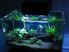 10 Tips on Designing a Freshwater Nature Aquarium Aquarium Garden, Discus Aquarium, Aquarium Fish Tank, Planted Aquarium, Freshwater Aquarium, Aquascaping, Betta Fish Tank, Fish Fish, Axolotl Tank