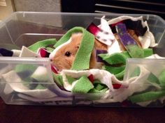 Dig Box for Guinea Pigs and Small Animals. Guinea pigs - the perfect pet! post from lifecreativelyorganized.com