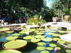 Hill Country Water Garden In Cedar Park | Plants | Pinterest | Gardens,  Parks And Water Garden