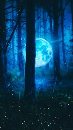 Moon In Forest - IPhone Wallpapers