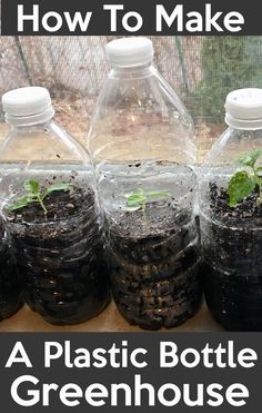 How To Make A Bottle Greenhouse. Reuse And Use Transparent Plastic Bottles As Greenhouse For Seeds S&; How To Make A Bottle Greenhouse. Reuse And Use Transparent Plastic Bottles As Greenhouse For Seeds S&; Plastic Bottle Greenhouse, Reuse Plastic Bottles, Miniature Greenhouse, Greenhouse Plans, Greenhouse Wedding, Diy Mini Greenhouse, Greenhouse Gardening, Plants In Bottles, Starting Seeds Indoors