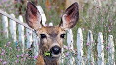 7 Plants That'll Keep Deer Out Of Your Garden