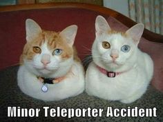 i really hope it's a pecularity of the breed... but the catcaption is kind of hilarious.