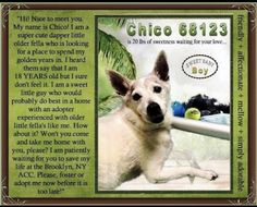 CHICO PULLED BY PUP STARZ RESCUED💚💚07/2019 - NEEDS HELP😥😥 Dog Words, Kiss My Face, Foster Dog, Charity Organizations, Waiting For Her, Nice To Meet, Quality Time, Rescue Dogs, Pet Adoption