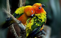 parrot image free hd widescreen, 1920x1200 (308 kB)