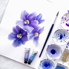Thunbergia Grandiflora in progress for new print. These blues and purples are addictive! Watercolor Cards, Watercolour Painting, Watercolor Flowers, Painting & Drawing, Watercolors, Botanical Art, Botanical Illustration, Watercolor Illustration, Purple Art