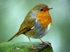 Robin on a post by Ashley Field on 500px