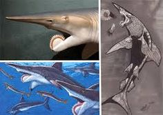 This creepy thing existed over 300 million years ago. A Whorl Shark. Weird Sharks, Weird Sea Creatures, Scary, Creepy, Hieronymus Bosch, Sounds Like, Prehistoric, Stuffed Animals, New Zealand