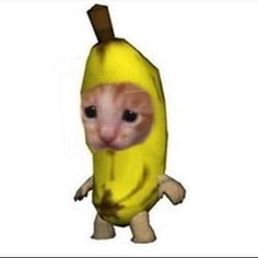 Fuck all of y'all. cat recipes monty the cat cats things cat base awesome cats cat and dog Memes Estúpidos, Cute Memes, Stupid Funny Memes, Haha Funny, Animal Memes, Funny Animals, Cute Animals, Reaction Pictures, Funny Pictures