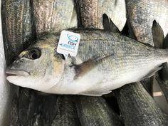 Αλιεία & περιβάλλον: χωρίς αλλαγές, δεν θάχουμε ψάρια - Pandespani | Συνταγές Μαγειρικής, Tips & Μυστικά Frozen Yogurt, Wine Recipes, Minions, Fish, Meat, Anonymous, Gourmet, Mascarpone, The Minions