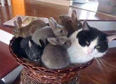 You may like this itty bitty bunnies with their cat. All are enjoying in a single basket.