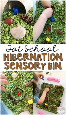 Hibernation Sensory Bin with split peas, rocks, small box caves, sticks pine cones, and bears.Perfect for tot school, preschool, and the kindergarten classroom.