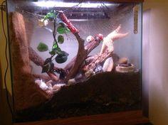 "Hermit Crab ""Crabitat"" set up in a 45 gallon cube."