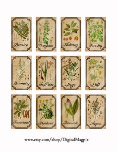Herb and spice apothecary labels digital от DigitalMagpie на Etsy