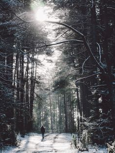 Forest Path Nature image has a public domain license. You can use it for Free and without restrictions even for commercial use Forest Path, Tree Forest, Free Stock Photos, Free Photos, Climate Action, Beautiful Park, Photo Journal, Nature Images, Free Travel