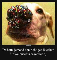 Cute labrador dog who got into the sprinkles. LOL haha So cute! Funny Dogs, Funny Animals, Cute Animals, Animal Funnies, Baby Animals, Funny Baby Pictures, Dog Pictures, Dog Photos, Cute Puppies