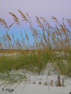 Sea Oats at Sunset: Gulf Shores, Alabama. My FAVORITE time of day when I'm there. Happens about this time.