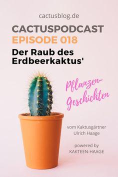 Warum Menschen wegen eines kleinen Kaktus kriminell wurden – eine echte #Räuberpistole aus unserer #Gärtnerei vom Kakteen-Gärtner Ulrich Haage aus #Erfurt! #cactuspodcast #podcast #geschichte #krimi #erdbeerkaktus #ilovecactus #kaktusliebe #kakteenhaage #ulrichhaage
