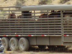 STOP BLM's war cast upon our wild horses,burros and our/their land and water. PLEASE SIGN PETITION