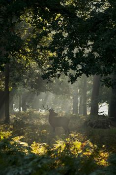 Perfect stag in the sunlight.