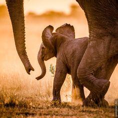 Baby Elephant by Gunther Wegner on 500px